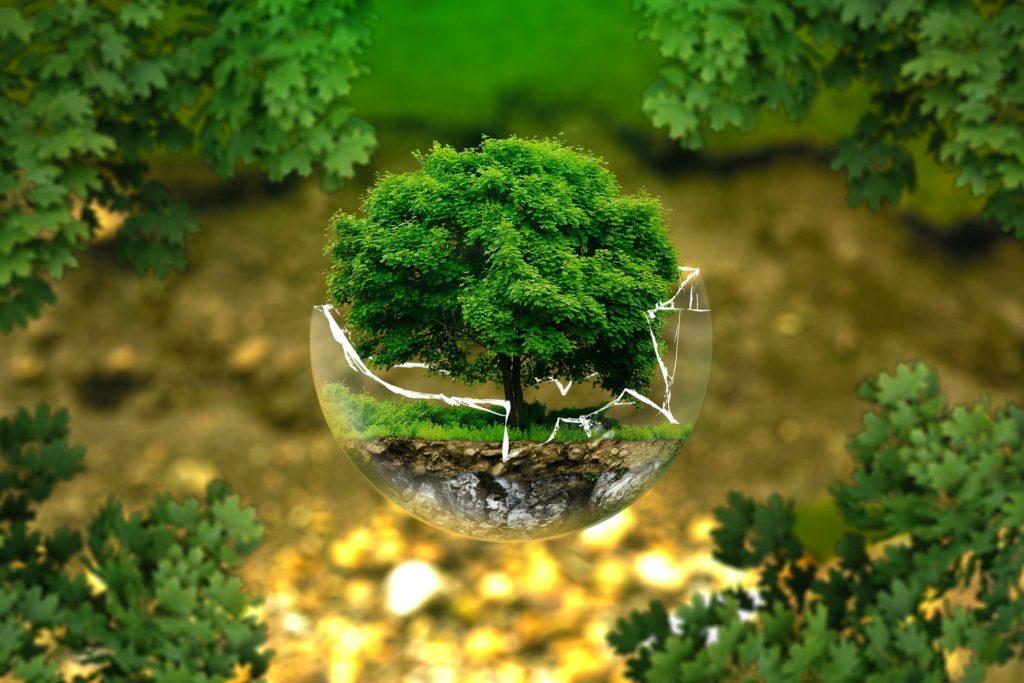 environmental law schools